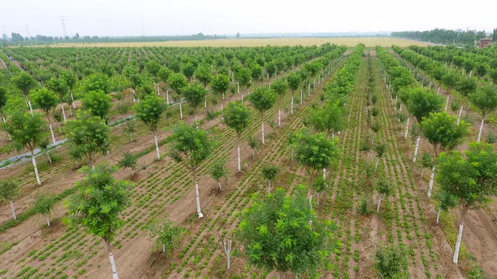 新兴际华投资:践行绿色发展理念  促进园林生态行稳致远-《国资报告》杂志